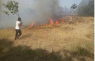 Mitteilung Waldbrände in Dersim