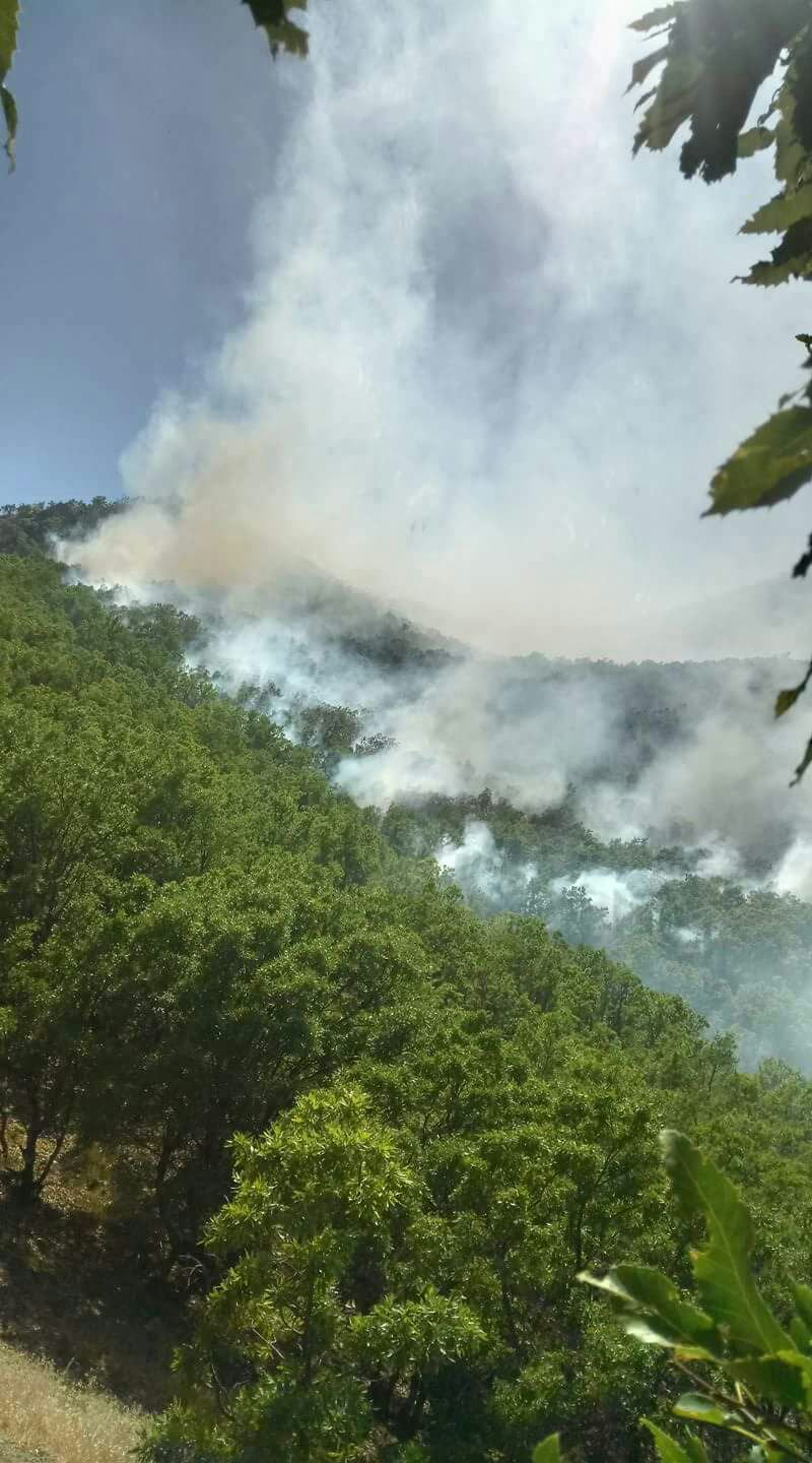 The devastating forest fires caused by the Turkish military forces threaten people and nature in the Eastern Anatolian city of Tunceli (Dersim)